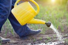 Watering vegetable garden royalty free stock image