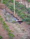 Watering  vegetable garden Stock Photo