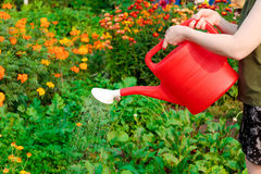 Watering vegetables Royalty Free Stock Images
