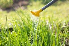 watering Water gevende tuin groenten ui De zomer Tuin de landbouwconcept stock afbeeldingen