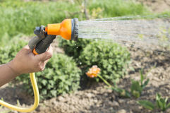 Watering water from a hose garden flowers Royalty Free Stock Image