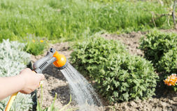 Watering water from a hose garden flowers Stock Photo