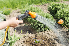 Watering water from a hose garden flowers Royalty Free Stock Photo