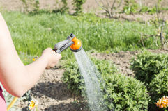 Watering water from a hose of various plants Stock Images