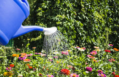 Watering. Water pouring from blue watering can Stock Photography