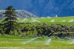 Watering, wheel line sprinkler irrigation. Wheel line sprinkler irrigation of a field and meadow on green farmland Stock Images