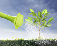 Watering young tree Royalty Free Stock Image