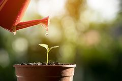 Watering young tree with watering pot Royalty Free Stock Photo