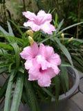Waterkanon nella piantatura del vaso fotografia stock libera da diritti