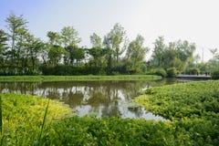 Waterkant aquatisch gras in zonnige de zomerochtend stock afbeelding