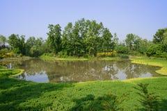 Waterkant aquatisch grasrijk en verdant hout in zonnige de zomermorni royalty-vrije stock foto