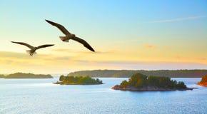 Waterlandschap met vliegende zeemeeuwen Royalty-vrije Stock Afbeelding