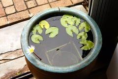 Waterlelie in een kom Stock Afbeeldingen