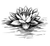 Waterlelie, hand getrokken vector Lotus-illustratie Royalty-vrije Stock Fotografie