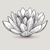Waterleliebloem, hand-trekt Vector illustratie Royalty-vrije Stock Afbeelding