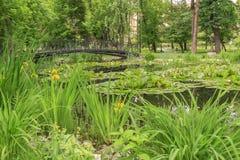 Waterleliebloemen en voetgangersbrug over een vijver in stadspark Stock Afbeeldingen
