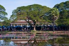 Waterlelies bij het meer in Siam Reap Stock Foto