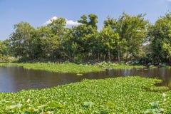 Waterlelies, gras, bomen en andere vegetatie in Brazos-het Park van de Krommingsstaat dichtbij Houston, Texas royalty-vrije stock foto
