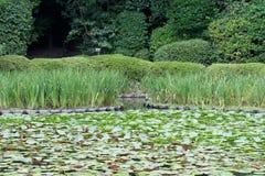 Waterlelies, Japanse Tuin, Kyoto Stock Foto