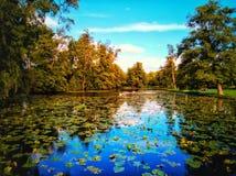 Waterlelies royalty free stock photos