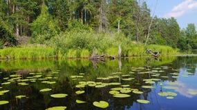 Waterlelieslandschap Stock Foto
