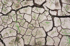 Waterless cracked soil Royalty Free Stock Photos