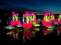 Waterlilies на воде на китайском фестивале фонарика стоковые фотографии rf