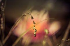waterlilies fotografia de stock royalty free