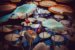 waterlilies Imagem de Stock