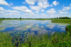 Waterlilies and clouds. Waterlilies and reflecting clouds on a pond, in carlos avery wildlife refuge, minnesota Stock Photo