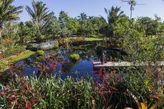 Waterlilies em um jardim botânico, em Nápoles, Florida, EUA Imagem de Stock Royalty Free