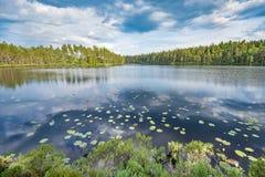 Waterlilies en la superficie del lago fotografía de archivo libre de regalías