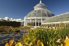 Waterlilies and Greenhouse Stock Photo