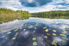 Waterlilies in het meer, met de blauwe die hemel en het pijnboombos in het donkere water wordt weerspiegeld Royalty-vrije Stock Fotografie