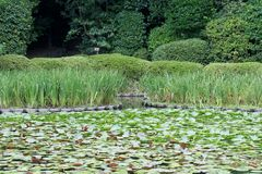 Waterlilies, Japanese Garden, Kyoto Stock Photo