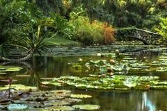Waterlilies och fotbro Royaltyfri Foto