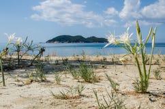 Waterlilies sur une plage grecque Images libres de droits