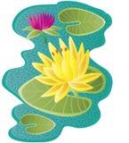 Waterlilies unosi się w stawie Zdjęcia Royalty Free