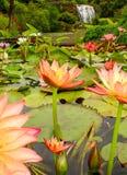 Waterlillies und Wasserfall lizenzfreies stockbild