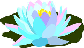 Waterlilly Stock Photo
