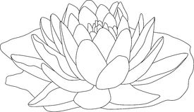 Waterlilly vector illustratie