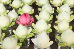 waterlily粉红色和白色 图库摄影