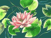 Waterlily в озере Стоковое Изображение