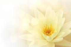 Waterlily Стоковое Фото