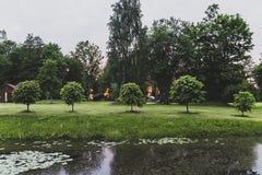 waterlily Στοκ εικόνα με δικαίωμα ελεύθερης χρήσης