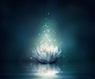 Waterlily auf Wasser Stockfotos