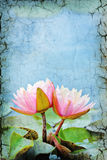 Waterlily Background Stock Image
