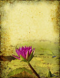 Waterlily Background Royalty Free Stock Images