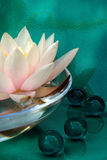 Waterlily and bathpearls Stock Photography