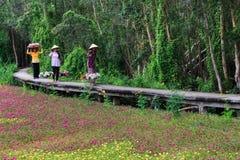 Waterlily bloeit seizoen royalty-vrije stock foto